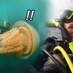นักชีววิทยาสุดทึ่งเมื่อเจอ 'แมงกะพรุนยักษ์' โดยบังเอิญ ระหว่างลงไปสำรวจโลกใต้น้ำ