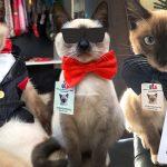 แมวจรจัดเข้าทำงานในสำนักงานกฎหมายที่ช่วยมัน จนได้เลื่อนขั้นเป็นนักกฎหมาย