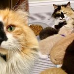 แมวสามสีถูกพบหน้าคลินิกสัตว์ เมื่อเจ้าหน้าที่ไปดู ก็พบว่ามันมีลูกน้อยแรกเกิดอยู่ด้วย