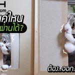 ทาสอยากรู้ 'แมวลอดช่อง' เป็นยังไง จะแคบที่สุดได้แค่ไหน ทดลองด้วยวิธีสุดน่ารัก