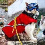 แมวจากศูนย์ฯ ถูกรับเลี้ยงและกลายเป็นแมวนักผจญภัย หลังทาสพามันออกเที่ยว