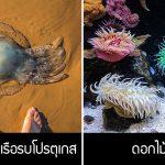 นี่คือ 7 สัตว์แห่งท้องทะเล ที่หน้าตาดูไม่มีพิษภัย แต่อันตรายกว่าที่ทุกคนเห็น