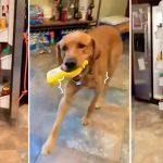 หมาช่วยหยิบของให้เจ้านาย ต้องการอะไรก็เอามาถูกหมด แสนรู้อะไรขนาดนั้น!!