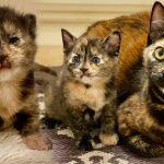 แม่แมวจรจัดได้ลูกตัวใหม่ ที่สีเหมือนตัวเองเปี๊ยบ แถมยังซนมากๆ ซะด้วย