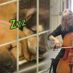 น้กดนตรีสาวจัดคอนเสิร์ตเล็กๆ ในศูนย์ฯ เล่นเชลโล่ให้หมาจรจัดฟังผ่อนคลายอารมณ์