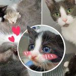 'แม่แมวใจดี' รับลูกแมวกำพร้าต่างแม่ 2 ตัว มาเป็นบุญธรรมและรักพวกมันเหมือนลูกแท้ๆ