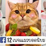 พาตาม 12 เพจเแมวยอดนิยมในประเทศไทย ดังจนเรียกได้ว่าเป็นเซเลบ 4 ขา