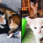 อาสาสมัครช่วยพาลูกแมวออกมาจากถุงขยะ และตามหาแม่ของมันมาอยู่ด้วย