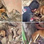 แม่หมาร้อนใจ รีบช่วยอาสาสมัครขุดดินเพื่อช่วยลูกหมา ที่ติดอยู่ใต้กองเศษหิน