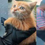 หนุ่มไบค์เกอร์และคุณลุง ต่างก็หยุดรถข้างทางกระทันหัน เพื่อช่วยแมวตัวน้อย