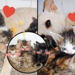 'อดีตสุนัขจรจัด' ช่วยลูกแมวที่ถูกทิ้งในกล่อง และคาบพวกมันเข้าบ้านทีละตัวๆ