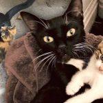 'แม่แมวจรจัด' อยู่ในสภาพผอมแห้ง แต่มันทำทุกวิถีทางให้ลูกน้อยรอดชีวิตและได้กินอิ่ม