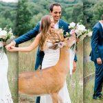 กวางเห็นคู่รักมาถ่ายรูปใกล้ๆ มันจึงขอเข้าร่วมเฟรมด้วย แถมแย่งช่อดอกไม้เจ้าสาวมาอีก