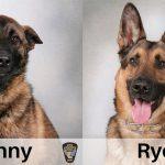ตำรวจเปิดประกวดหมาตำรวจหล่อ ในวันสุนัขแห่งชาติ บอกเลยว่าแต่ละตัวงานดีมาก!!