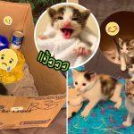 เหล่าแมวน้อยถูกทิ้งในลังกระดาษ มีโอกาสได้เติบโต เพราะคนใจดีมาเจอทันเวลา