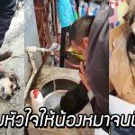 พลเมืองดีเห็นลูกหมาหยุดหายใจ จึงเข้าไป CPR และผายปอดให้ จนมันฟื้นขึ้นมาอีกครั้ง