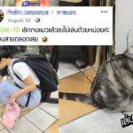 สาวขอคำปรึกษาอยากได้วิธีเลิกเล่นกับแมว ปรากฏมีแต่คนหัวอกเดียวกัน เลิกไม่ได้!!