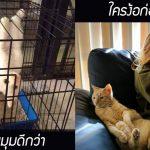 22 ภาพสแนปแชทสุดฮาของเจ้านายขนปุย เผยธาตุความบ้าบอของแมว ตลกไม่สิ้นสุด