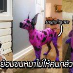 เจ้าของรู้สึกแย่ที่ผู้คนกลัวสุนัขของเธอ เลยย้อมตัวมันเป็นสีชมพู เพื่อให้มันดูน่ารักมากขึ้น