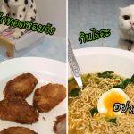 นี่สินะที่เรียกว่าแมวมอง… เจ้าแมวตัวดี มานั่งจ้องทาสกินอาหารทุกมื้อ มันกดดันนะ!!