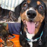 'สุนัขผู้ซื่อสัตย์' อยู่กับครอบครัวถึง 10 ปี แต่เมื่อพวกเขาย้ายออกไป กลับไม่พามันไปด้วย…