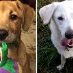 18 ภาพก่อน-หลัง ของสุนัขที่ได้รับการช่วยเหลือ กับเรื่องราวที่ทำให้รู้สึกอบอุ่นหัวใจ