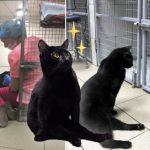 แมวพิการได้รับการช่วยเหลือ ผันตัวเป็นพยาบาลตอบแทน คอยปลอบเพื่อนๆ ในคลินิกสัตว์