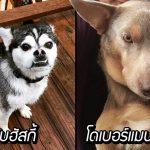 รวมภาพ 'สุนัขพันธุ์ผสม' ที่มีหน้าตาไม่ซ้ำกับสุนัขพันธุ์ไหนในโลก แตกต่างอย่างลงตัวสุดๆ