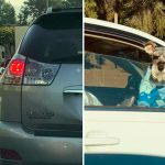 ใครไม่อยากให้รถติดนาน หนุ่มคนนี้อยาก เพราะจะได้ถ่ายรูปหมาไซแสนน่ารักเก็บไว้