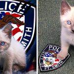 คุณตำรวจรับแมวตาฟ้าตัวน้อยเข้าหน่วย ทำให้ประชาชนหลังรักมันตั้งแต่ยังไม่เริ่มงาน