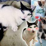 แม่แมวซาบซึ้งมากที่มนุษย์สามารถช่วย 'ลูกที่คลอดก่อนกำหนด' ของมันเอาไว้ได้