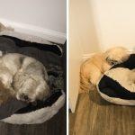 หมาเว้นที่ว่างไว้ เผื่อให้เพื่อนตัวโปรดของมันนอนด้วย แม้ว่าเพื่อนจะตายไปแล้ว