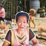 คุณป้าผู้รักสัตว์ ช่วยดูแลหมาจรจัดกว่า 100 ชีวิต ด้วยเงินที่หามาจากการขายของ
