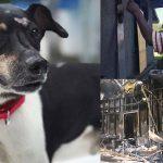 บ้านของชายหนุ่มเกิดไฟไหม้กลางดึก เจ้าหมาจึงเอาชีวิตตัวเองเข้าปกป้องทุกคน