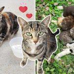 หญิงสาวให้ข้าวแมวจรทุกวัน ในที่สุดมันก็ไว้ใจเธอ และยอมให้เธอดูแลลูกของมัน