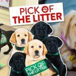 สารคดีใหม่จาก 'Netflix'  ติดตามชีวิตสุนัขนำทางตั้งแต่ถูกคัดเลือก ฝึกฝนและเริ่มให้บริการ