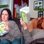 น้องหมาขี้อ้อน ขัดขวางการอ่านหนังสือของแม่ เพื่อให้เธอสนใจมันแต่เพียงผู้เดียว