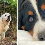 รีวิวกล้อง iPhone 11 Pro ฉบับคนรักสัตว์ แล้วคุณจะได้รู้ว่ามันถ่ายสัตว์สวยไหม!?