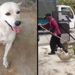 หนุ่มเล่นกับหมาจรจนสนิท แต่แล้วมันก็ถูกจับตัวไป เขาจึงขอให้ใครสักคนช่วยมัน