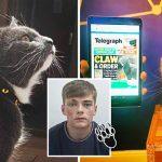 โจรปล้นบ้านถูกจับกุม จากเบาะแสถูกแมวข่วน ทำให้ตำรวจตามตัวจากรอยเลือดได้