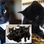 อาสาสมัครแปลกใจมาก เมื่อพบว่า 'แม่แมว' ที่ดูแลลูกแมวจรอยู่ แท้จริงเป็น 'ตัวผู้' !?