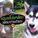หนุ่มตั้งกล้องถ่าย Timelapse สายฝน โดนฮัสกี้ขโมยไปถ่ายการผจญภัยของตัวเองซะงั้น