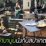 ลิงบาบูนป่วนร้านอาหาร นั่งกินสปาเกตตี้อย่างสบายใจ ราวกับจองโต๊ะเอาไว้แล้ว