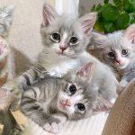 2 ลูกแมวแรกเกิดได้รับการช่วยเหลือทันเวลา พวกมันจึงมีโอกาสเติบโตขึ้นอย่างสง่างาม