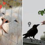 รวมภาพ 'สัตว์เผือก' แม้เกิดมาพร้อมความผิดปกติ แต่ก็มีความงดงามในเวลาเดียวกัน