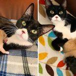 'แมวจรท้อง' เข้าไปขอความช่วยเหลือจากมนุษย์ ลูกๆ ของมันจึงได้เกิดในบ้านที่ปลอดภัย