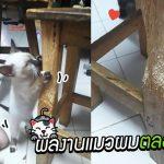ทาสโชว์ผลงาน 'แมว' ในบ้านตลอด 15 ปีที่ผ่านมา ชาวเน็ตถาม 'นี่แมวหรือปลวก!?'