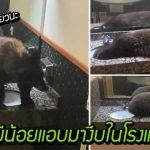 หมีน้อยบุกเข้ามางีบ ในห้องน้ำโรงแรม ดูสบายมากจนไม่ยอมลุกไปไหนเลย