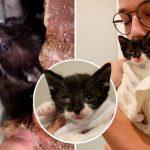 ลูกแมวน้อยส่งเสียงเพอร์ดังๆ เพื่อเป็นการบอกมนุษย์ ว่ามันดีใจที่มีคนมาช่วยเหลือ