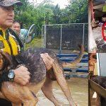 น้ำท่วมจังหวัดร้อยเอ็ด กู้ภัยออกช่วยทั้งคนทั้งหมา ไม่ทอดทิ้งสัตว์ให้ลำบาก